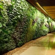 تصویر یک دیوار سبز که در یک ساختمان که نمای قهوه ای رنگ دارد.
