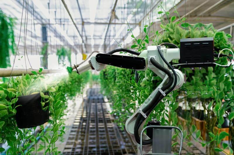 تصاویری از یک ربات در حال کار در یک گلخانه پر از گیاهان سبز که این کار در راستای هوشمندسازی گلخانه انجام شده است.