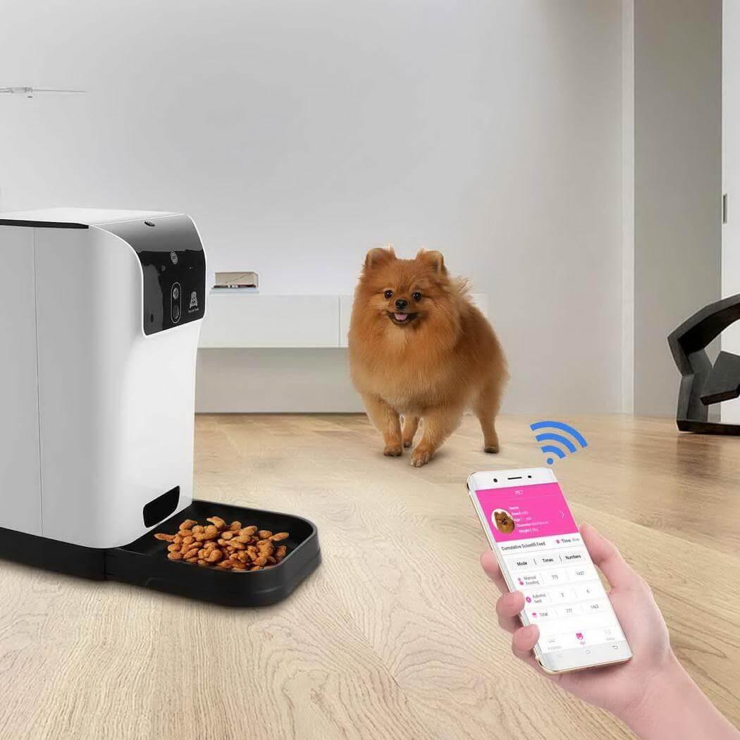 تصویری از حیوان خانگی با ظرف غذای هوشمند را نشان می دهد.